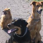 Kimba, Nico und Jeany