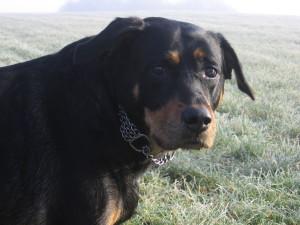 Hunde_020
