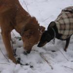 Nico und Tini
