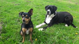 Die Hundeführerschen Anwärter  Tini und Shara
