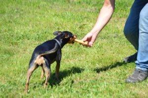 Hundeführerschen