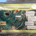 Wasserbüffel Weideprojekt