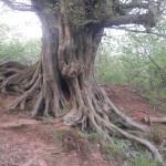 Kallenborn Naturdenkmal