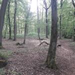 Wengenwald