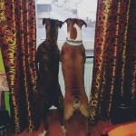 Kuma und Mira